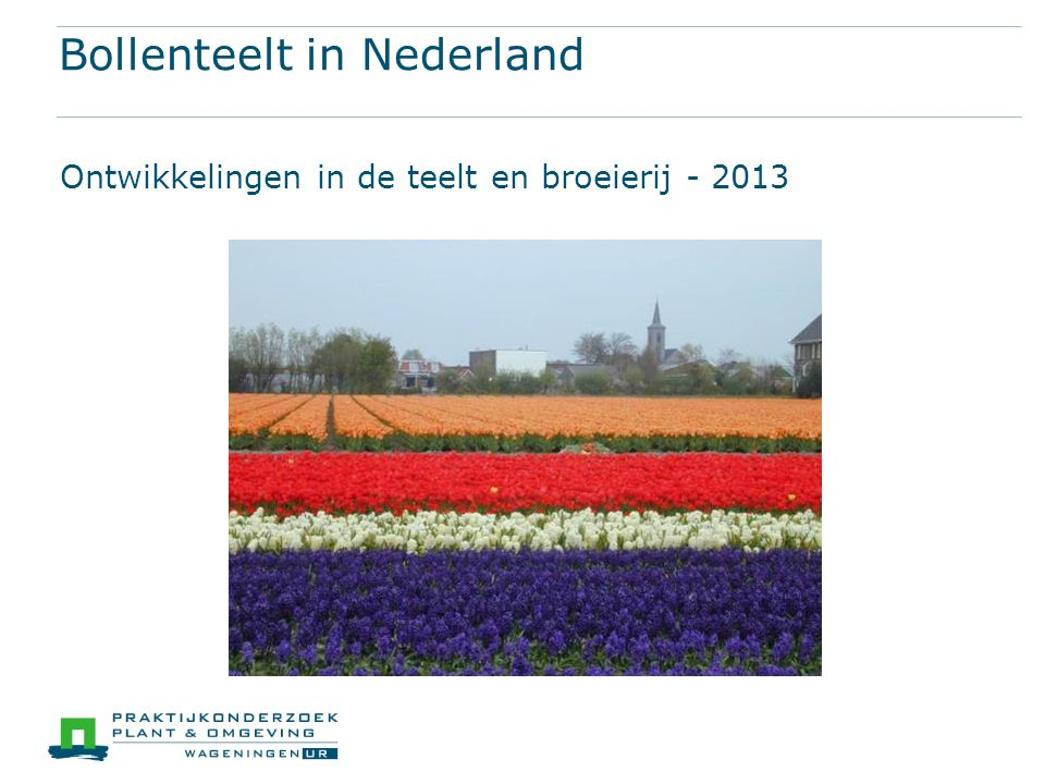 Bollenteelt in Nederland Ontwikkelingen in de teelt en broeierij - 2013