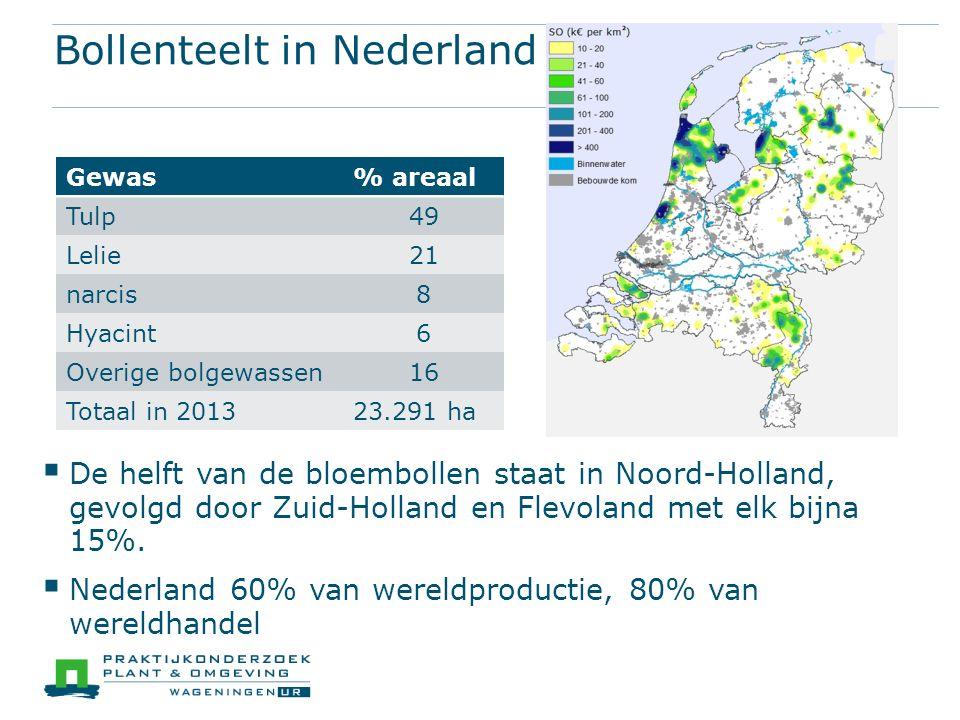 Bollenteelt in Nederland  De helft van de bloembollen staat in Noord-Holland, gevolgd door Zuid-Holland en Flevoland met elk bijna 15%.