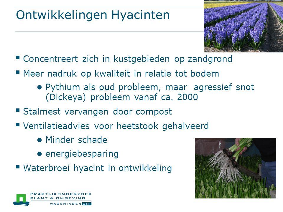Ontwikkelingen Hyacinten  Concentreert zich in kustgebieden op zandgrond  Meer nadruk op kwaliteit in relatie tot bodem ● Pythium als oud probleem, maar agressief snot (Dickeya) probleem vanaf ca.