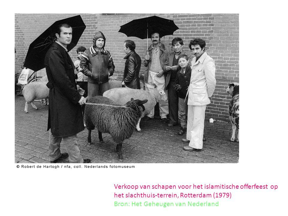 Verkoop van schapen voor het islamitische offerfeest op het slachthuis-terrein, Rotterdam (1979) Bron: Het Geheugen van Nederland