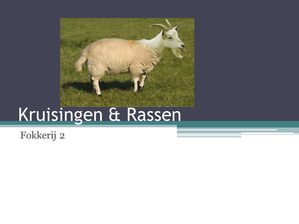 Kruisingen & Rassen Fokkerij 2