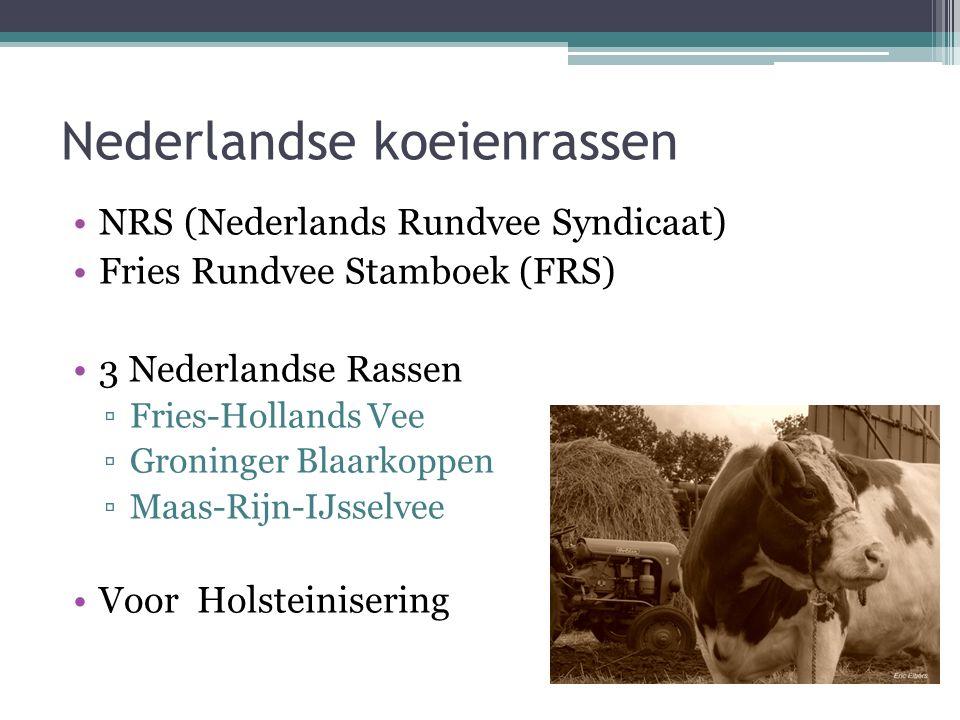 Nederlandse koeienrassen NRS (Nederlands Rundvee Syndicaat) Fries Rundvee Stamboek (FRS) 3 Nederlandse Rassen ▫Fries-Hollands Vee ▫Groninger Blaarkoppen ▫Maas-Rijn-IJsselvee Voor Holsteinisering