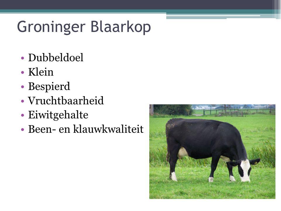 Groninger Blaarkop Dubbeldoel Klein Bespierd Vruchtbaarheid Eiwitgehalte Been- en klauwkwaliteit