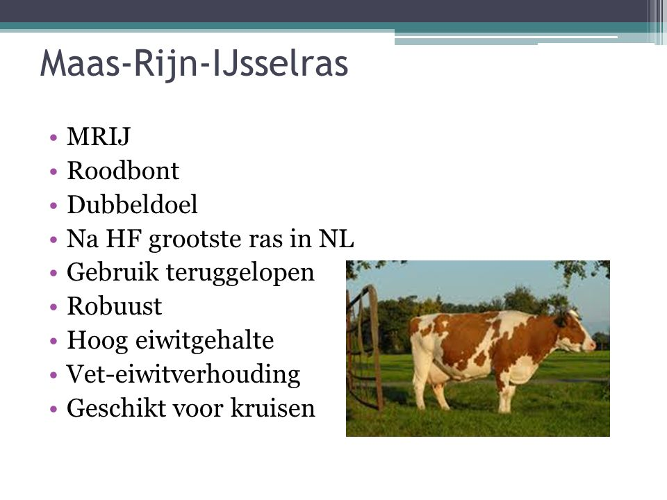 Maas-Rijn-IJsselras MRIJ Roodbont Dubbeldoel Na HF grootste ras in NL Gebruik teruggelopen Robuust Hoog eiwitgehalte Vet-eiwitverhouding Geschikt voor kruisen