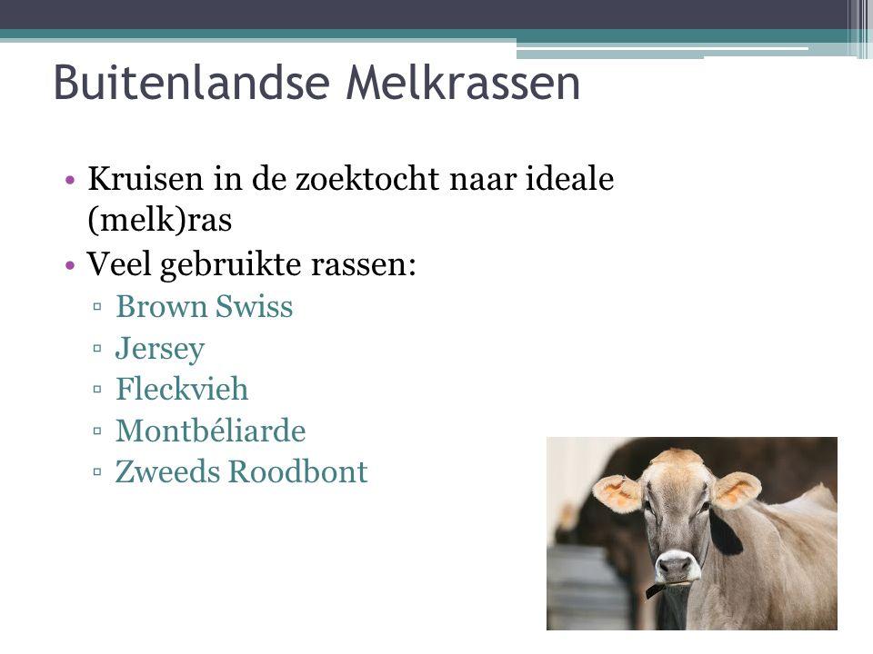 Buitenlandse Melkrassen Kruisen in de zoektocht naar ideale (melk)ras Veel gebruikte rassen: ▫Brown Swiss ▫Jersey ▫Fleckvieh ▫Montbéliarde ▫Zweeds Roo