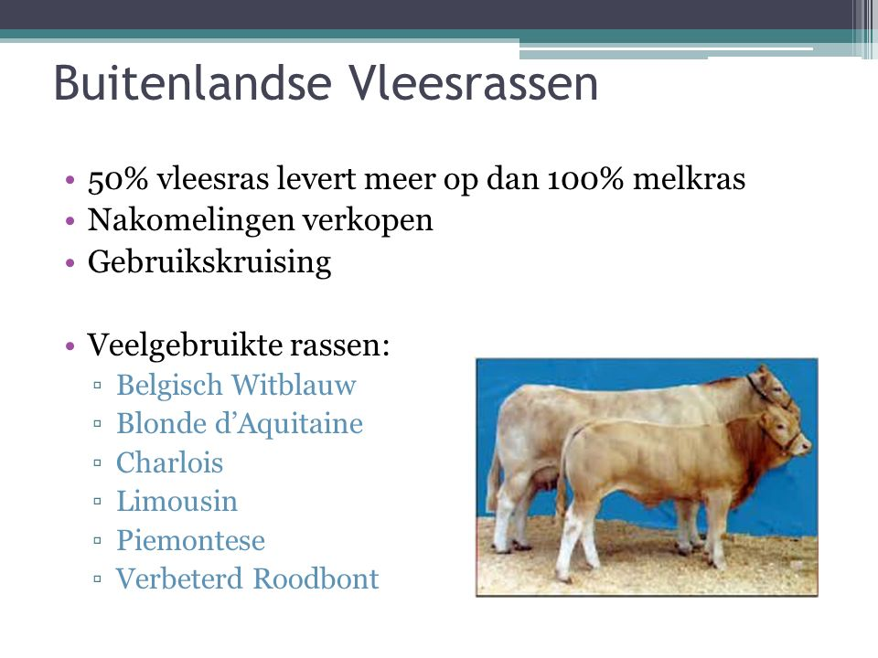 Buitenlandse Vleesrassen 50% vleesras levert meer op dan 100% melkras Nakomelingen verkopen Gebruikskruising Veelgebruikte rassen: ▫Belgisch Witblauw ▫Blonde d'Aquitaine ▫Charlois ▫Limousin ▫Piemontese ▫Verbeterd Roodbont