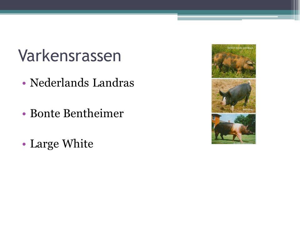 Varkensrassen Nederlands Landras Bonte Bentheimer Large White