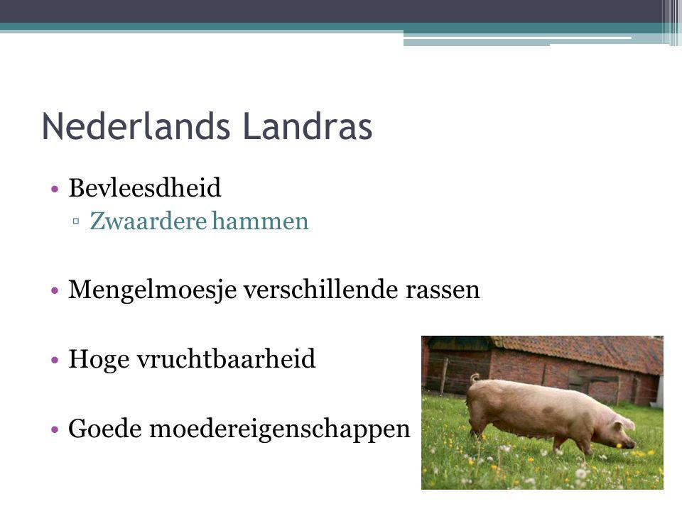 Nederlands Landras Bevleesdheid ▫Zwaardere hammen Mengelmoesje verschillende rassen Hoge vruchtbaarheid Goede moedereigenschappen
