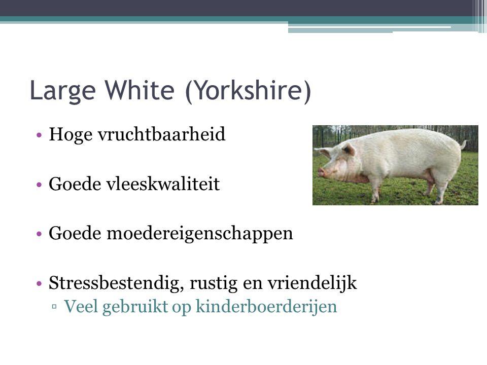 Large White (Yorkshire) Hoge vruchtbaarheid Goede vleeskwaliteit Goede moedereigenschappen Stressbestendig, rustig en vriendelijk ▫Veel gebruikt op kinderboerderijen