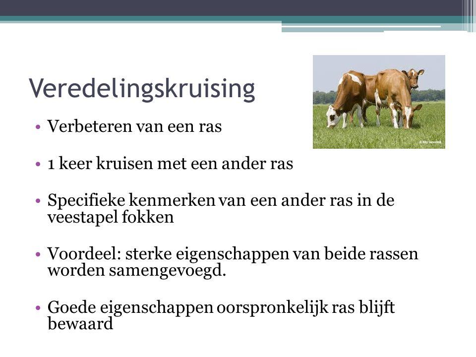 Veredelingskruising Verbeteren van een ras 1 keer kruisen met een ander ras Specifieke kenmerken van een ander ras in de veestapel fokken Voordeel: st
