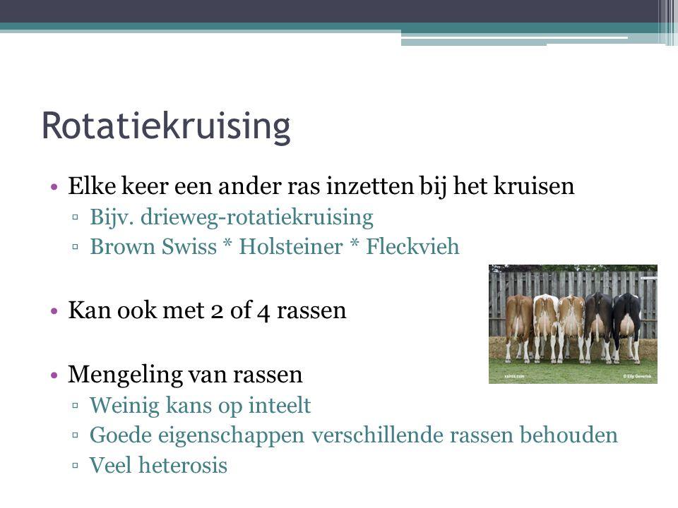Rotatiekruising Elke keer een ander ras inzetten bij het kruisen ▫Bijv. drieweg-rotatiekruising ▫Brown Swiss * Holsteiner * Fleckvieh Kan ook met 2 of