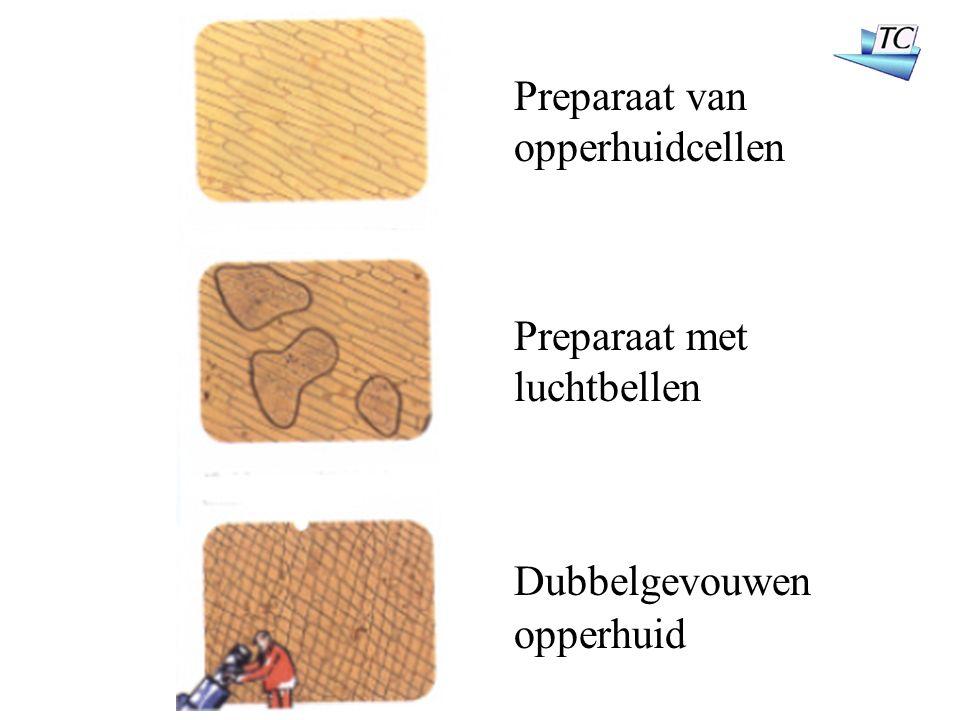 Preparaat van opperhuidcellen Preparaat met luchtbellen Dubbelgevouwen opperhuid