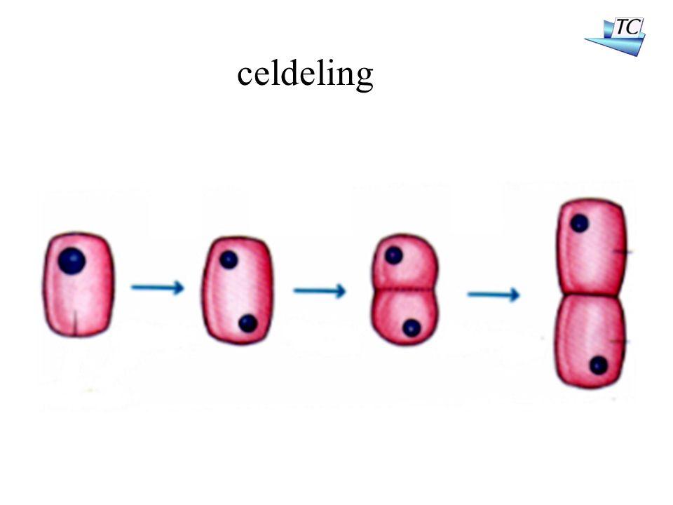 celdeling