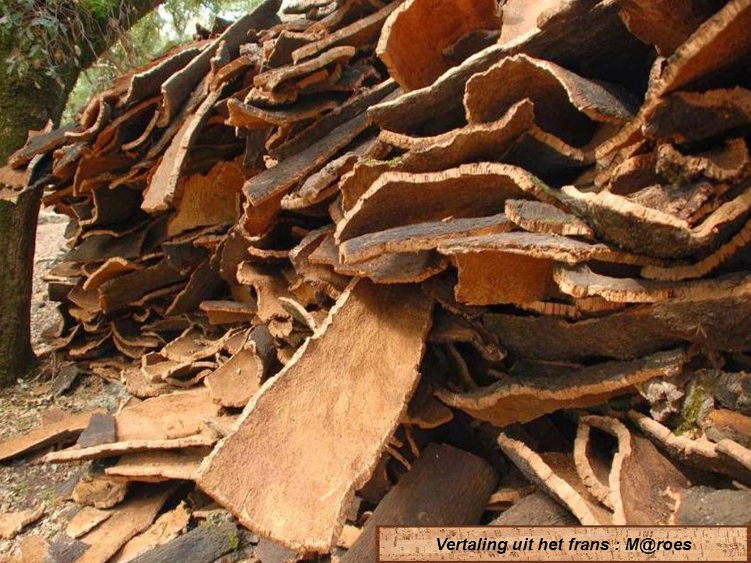 De productie van kurk is erkend als één van de meest ecologische en recycleerbare op onze planeet.