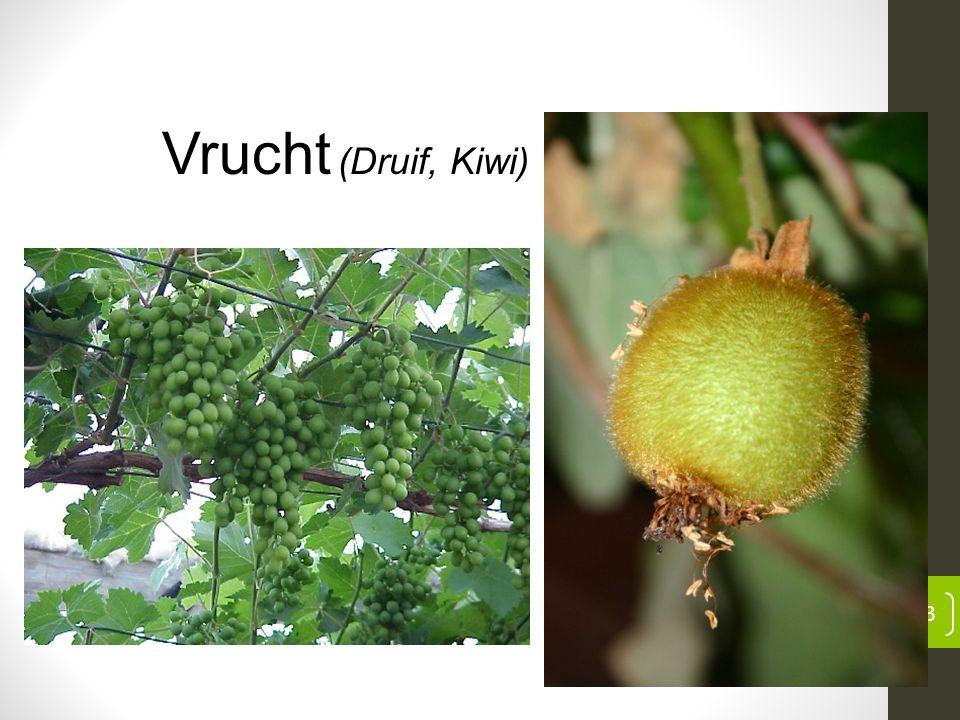 13 Vrucht (Druif, Kiwi)