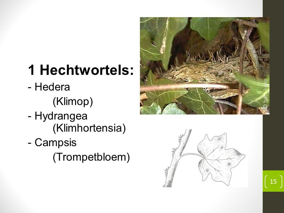 1 Hechtwortels: - Hedera (Klimop) - Hydrangea (Klimhortensia) - Campsis (Trompetbloem) 15