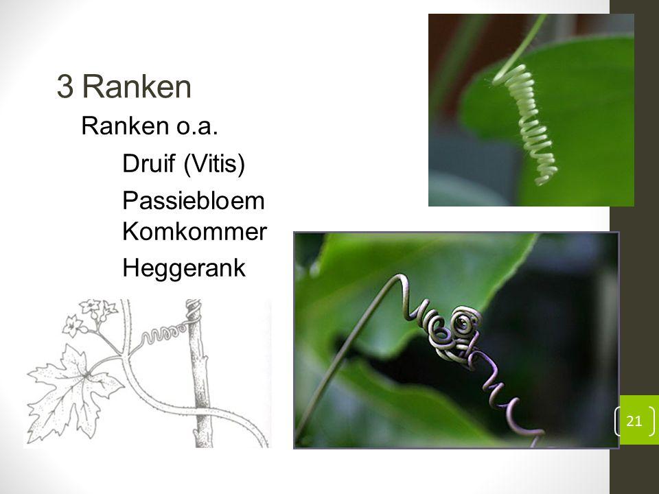 3 Ranken Ranken o.a. Druif (Vitis) Passiebloem Komkommer Heggerank 21