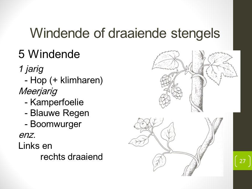 Windende of draaiende stengels 5 Windende 1 jarig - Hop (+ klimharen) Meerjarig - Kamperfoelie - Blauwe Regen - Boomwurger enz.