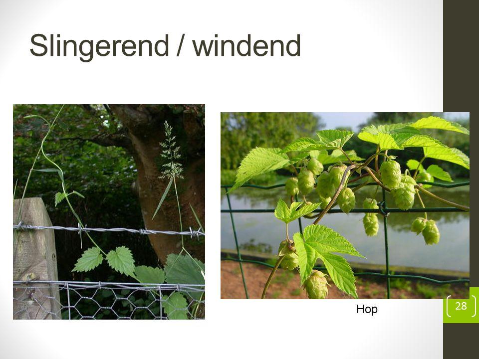 Slingerend / windend 28 Hop