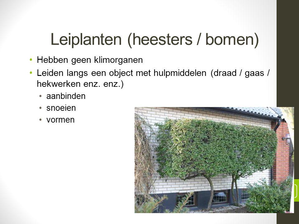 Leiplanten (heesters / bomen) Hebben geen klimorganen Leiden langs een object met hulpmiddelen (draad / gaas / hekwerken enz.