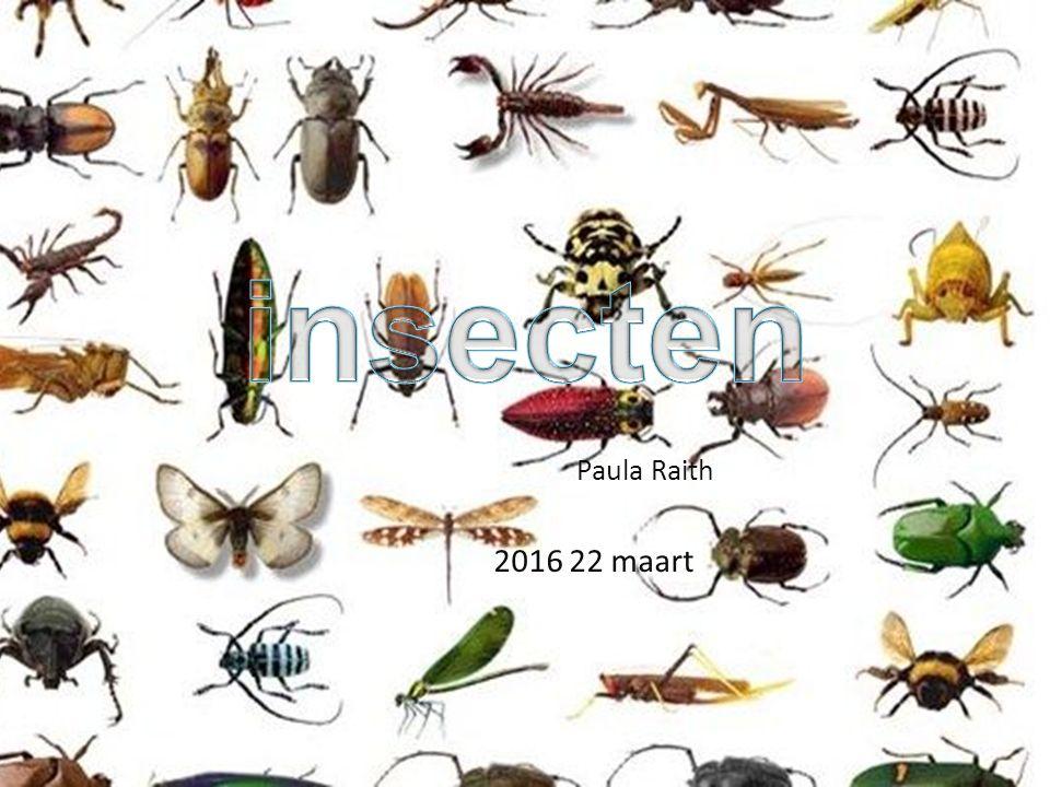 Wat is een insect .Hoeveel soorten insecten zijn er .