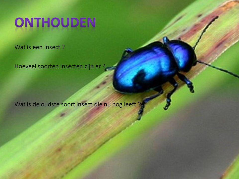 Wat is een insect . Hoeveel soorten insecten zijn er .