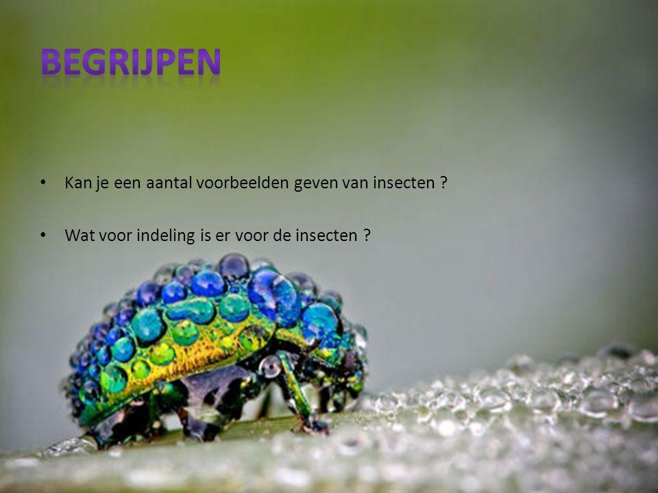 Kan je een aantal voorbeelden geven van insecten ? Wat voor indeling is er voor de insecten ?