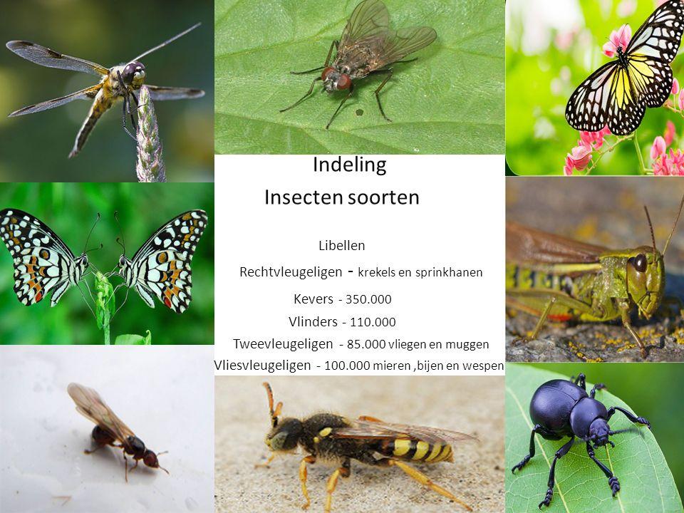 Indeling Insecten soorten Libellen Rechtvleugeligen - krekels en sprinkhanen Kevers - 350.000 Vlinders - 110.000 Tweevleugeligen - 85.000 vliegen en muggen Vliesvleugeligen - 100.000 mieren,bijen en wespen