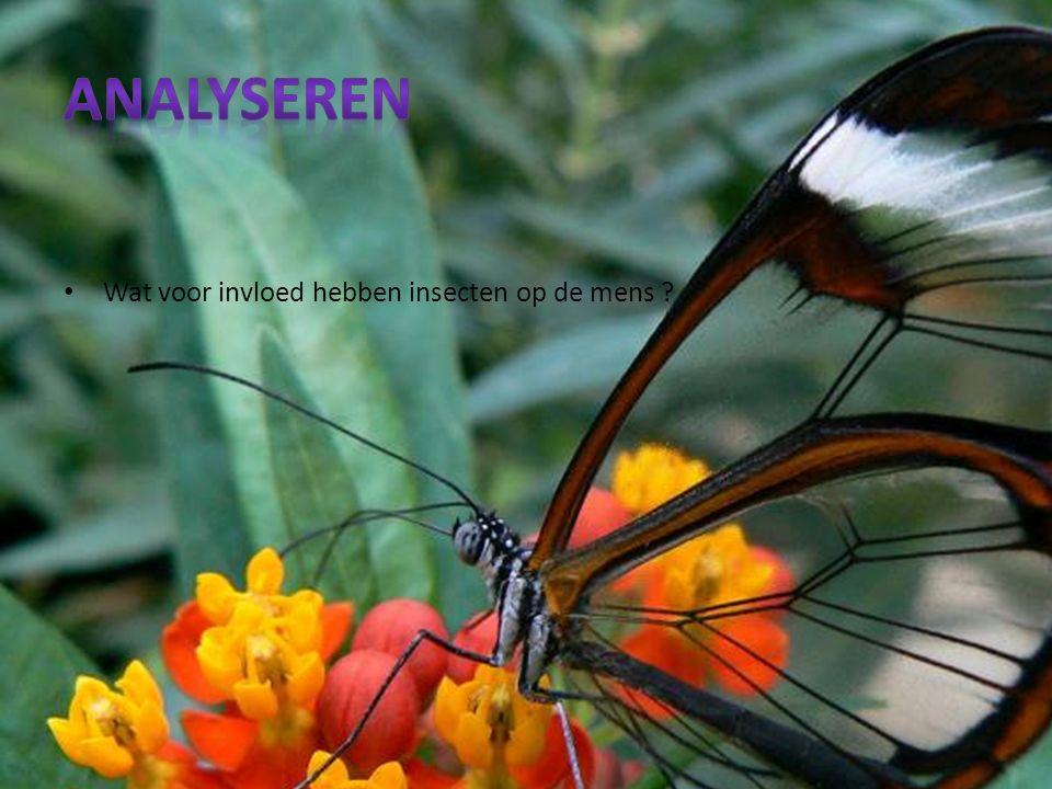 Wat voor invloed hebben insecten op de mens ?