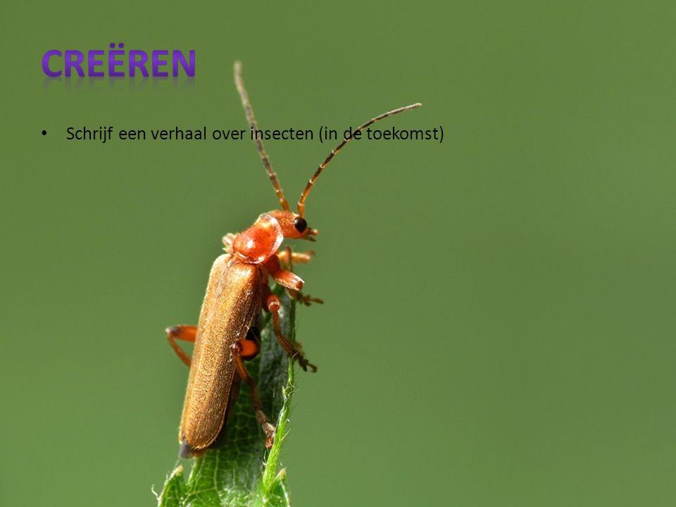 Schrijf een verhaal over insecten (in de toekomst)