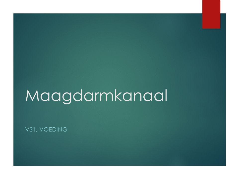 Maagdarmkanaal V31, VOEDING