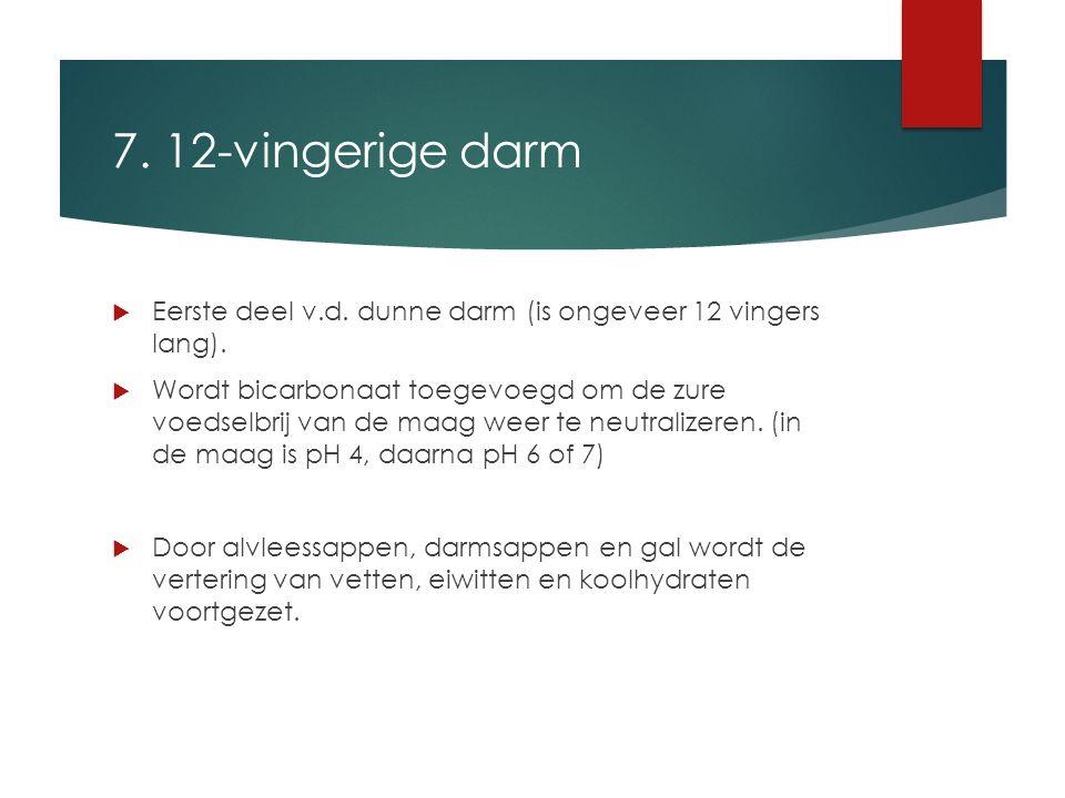 7. 12-vingerige darm  Eerste deel v.d. dunne darm (is ongeveer 12 vingers lang).  Wordt bicarbonaat toegevoegd om de zure voedselbrij van de maag we