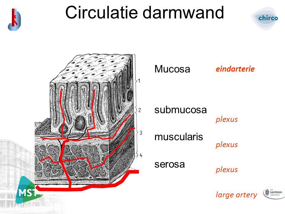 Circulatie darmwand Mucosa submucosa muscularis serosa eindarterie plexus large artery