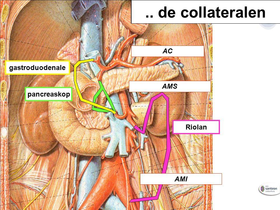 Medical School Twente WMDI AMS AC Riolan gastroduodenale pancreaskop AMI De vaten.. de collateralen