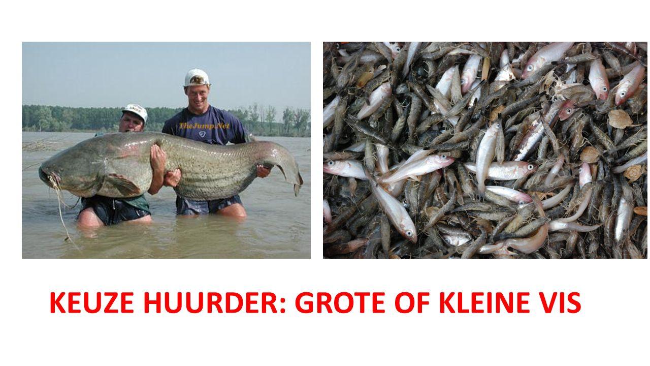KEUZE HUURDER: GROTE OF KLEINE VIS