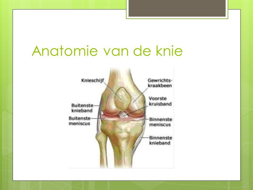 Anatomie van de knie