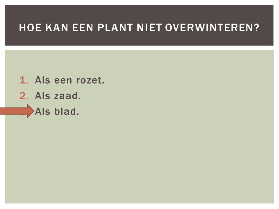 1.Als een rozet. 2.Als zaad. 3.Als blad. HOE KAN EEN PLANT NIET OVERWINTEREN?