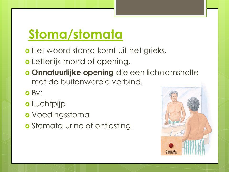 Stoma/stomata  Het woord stoma komt uit het grieks.