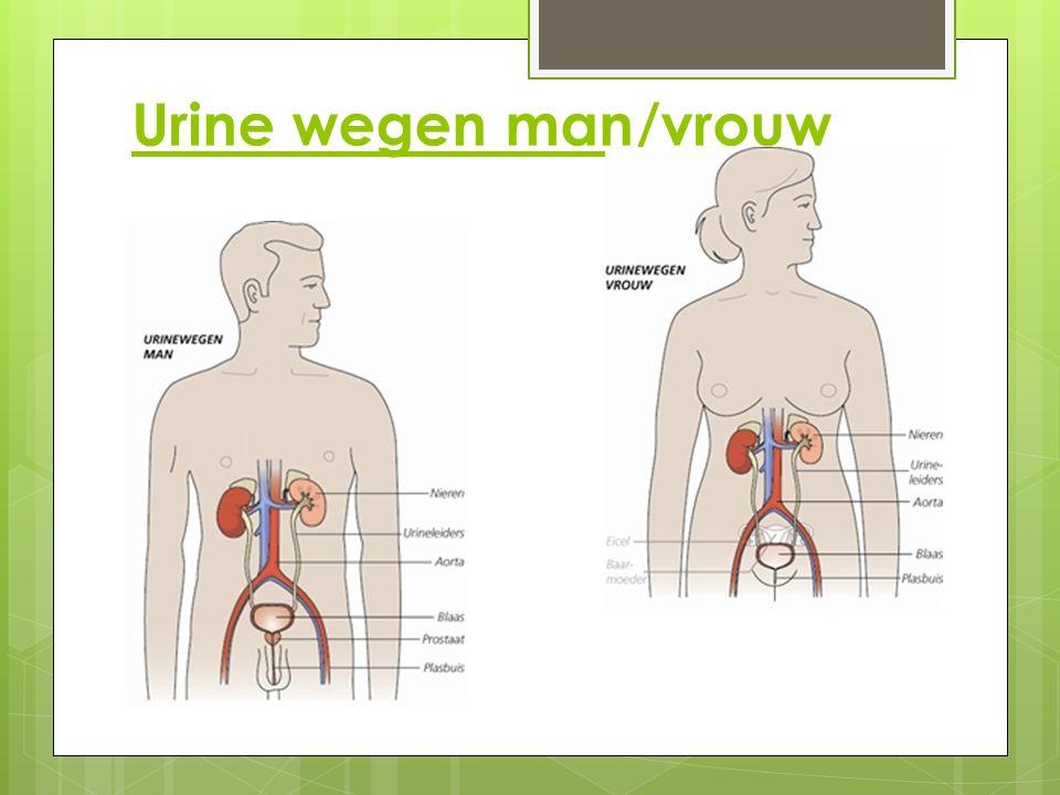Urine wegen man/vrouw