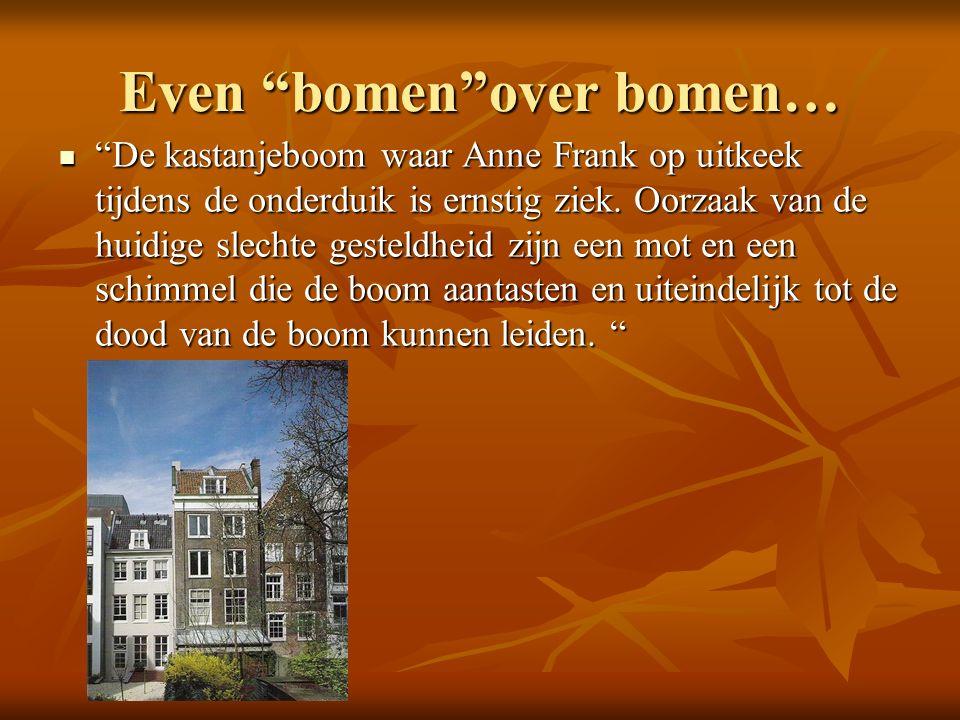 Even bomen over bomen… De kastanjeboom waar Anne Frank op uitkeek tijdens de onderduik is ernstig ziek.