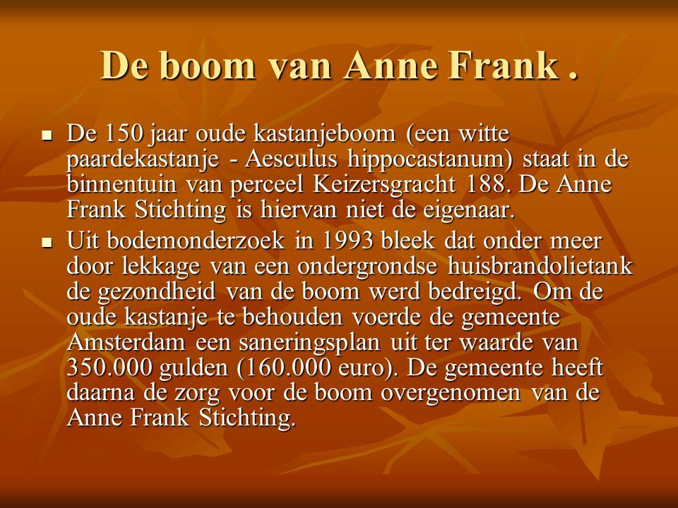 De boom van Anne Frank.