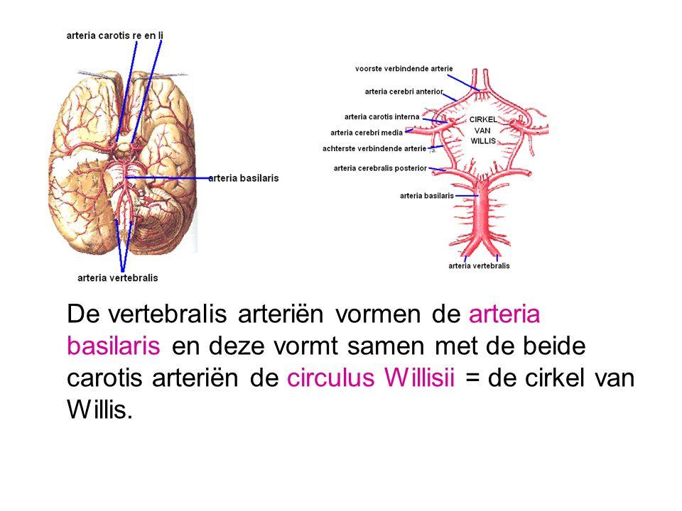 Groß Anatomie Der A. Carotis Interna Ideen - Anatomie Ideen ...
