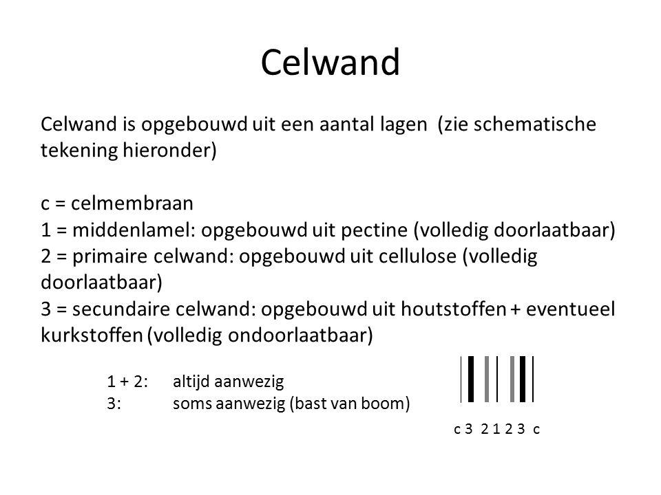 Celwand is opgebouwd uit een aantal lagen(zie schematische tekening hieronder) c = celmembraan 1 = middenlamel: opgebouwd uit pectine (volledig doorlaatbaar) 2 = primaire celwand: opgebouwd uit cellulose (volledig doorlaatbaar) 3 = secundaire celwand: opgebouwd uit houtstoffen + eventueel kurkstoffen (volledig ondoorlaatbaar) 1 + 2:altijd aanwezig 3:soms aanwezig (bast van boom) c 3 2 1 2 3 c Celwand