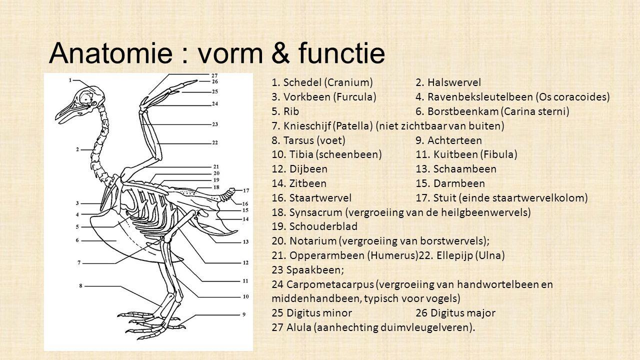 Anatomie : vorm & functie 1.Schedel (Cranium)2. Halswervel 3.