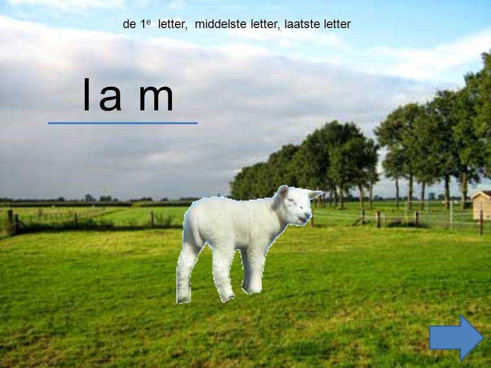 zoek de 1e letter lam lam lam am zoek de middelste letterzoek de laatste letter