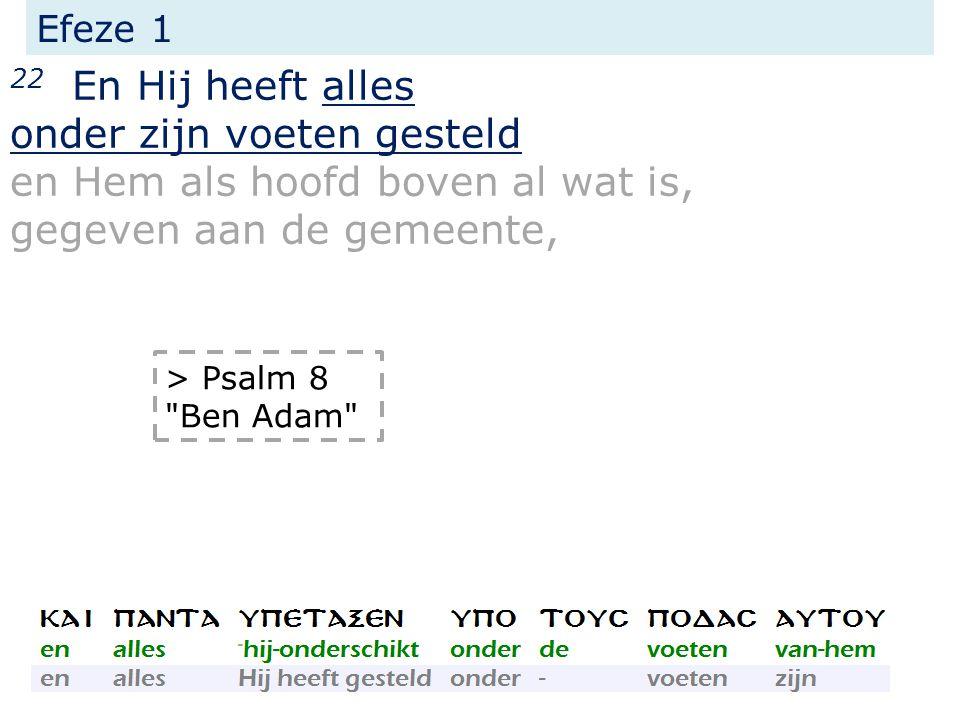 Efeze 1 22 En Hij heeft alles onder zijn voeten gesteld en Hem als hoofd boven al wat is, gegeven aan de gemeente, > Psalm 8 Ben Adam
