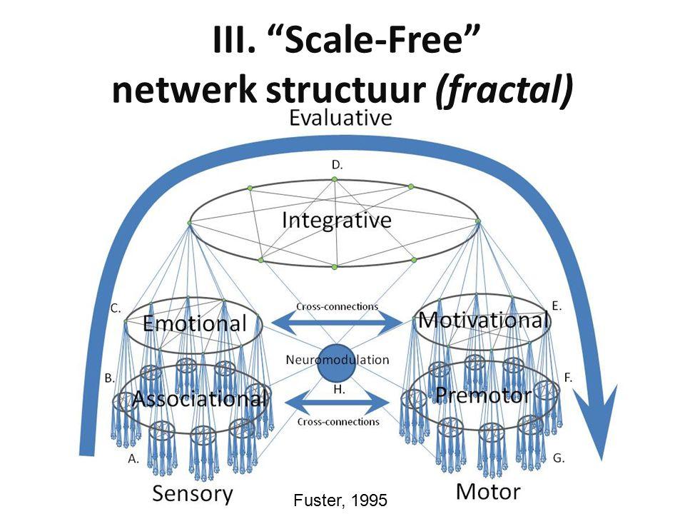 III. Scale-Free netwerk structuur (fractal) Fuster, 1995