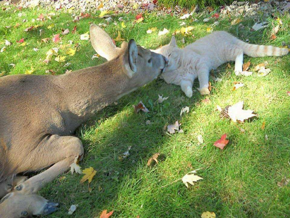 Herinneringen aan Bambi en Stampertje.