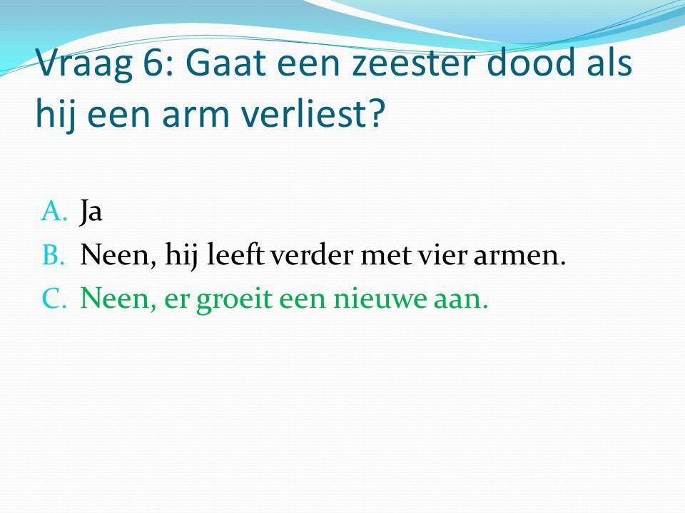 Vraag 6: Gaat een zeester dood als hij een arm verliest? A. Ja B. Neen, hij leeft verder met vier armen. C. Neen, er groeit een nieuwe aan.