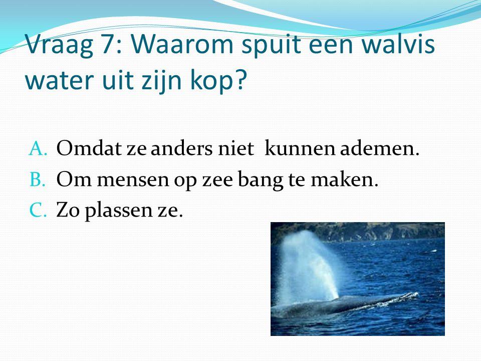 Vraag 7: Waarom spuit een walvis water uit zijn kop? A. Omdat ze anders niet kunnen ademen. B. Om mensen op zee bang te maken. C. Zo plassen ze.